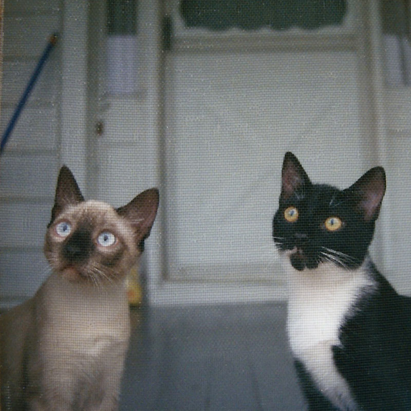Ashes and his brother Oreo 1999