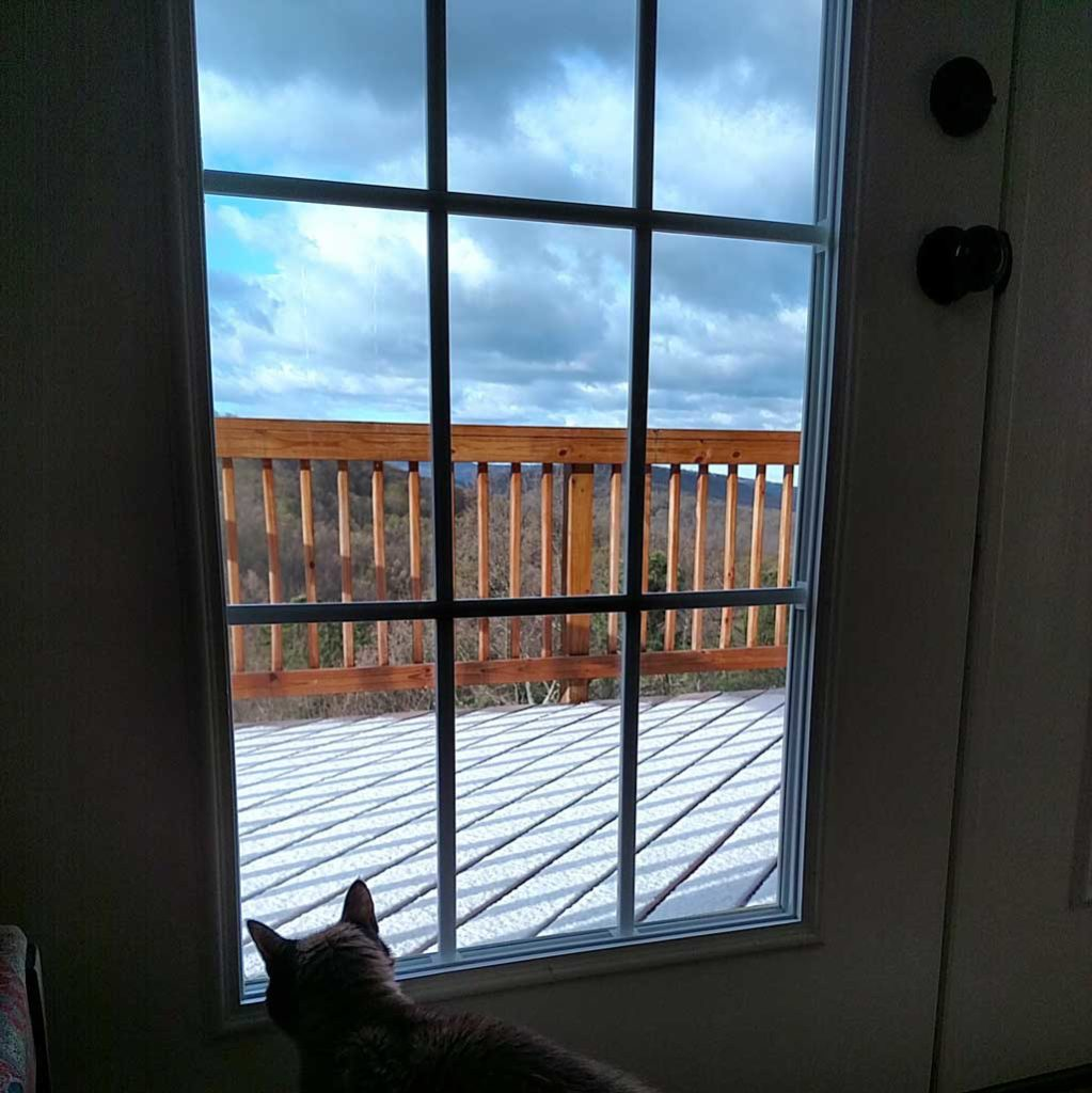His Royal Highness looking out the back door