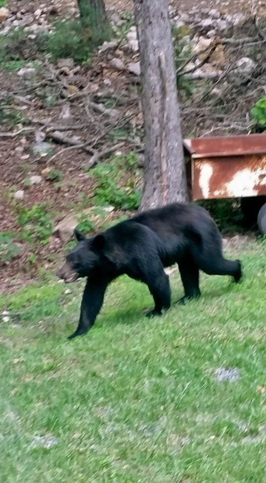 Photo Courtesy of Mountain Neighbor: Jason Herdon