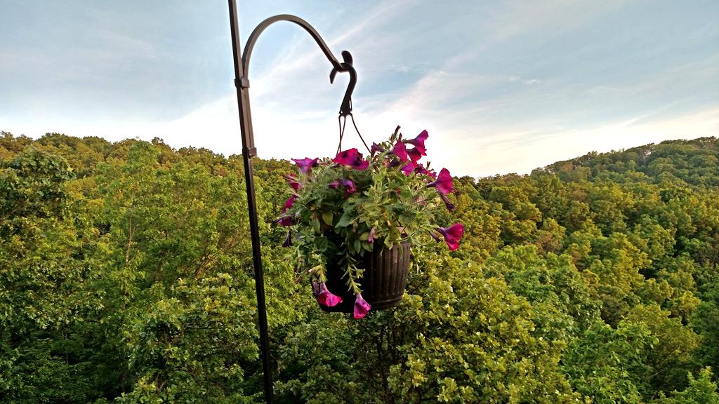 plant-back-on-hook